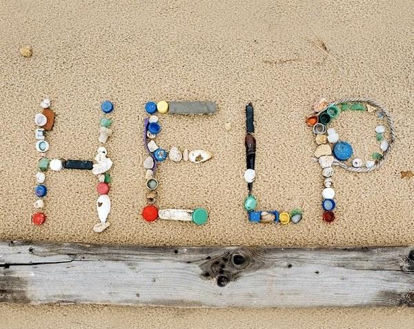 Le materie plastiche rappresentano oltre l'85% dei rifiuti marini e mettono a rischio tutte le specie animali.