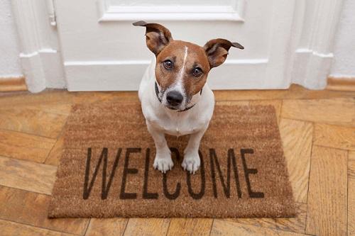 A meno che non vi sia una regola approvata all'unanimità, tutti i condomini hanno diritto a tenere un animale domestico in casa.