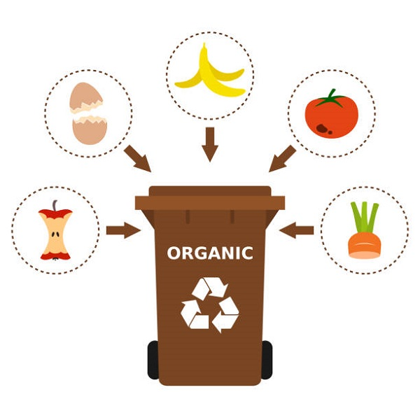 I rifiuti organici sono rifiuti biodegradabili di origine vegetale o animale, in grado di degradarsi biologicamente. In molti comuni vengono inseriti in appositi sacchetti, nel cestino marrone.